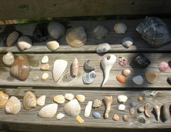 North Carolina Shell Club Meeting on Ocracoke Island March 19th and 20th