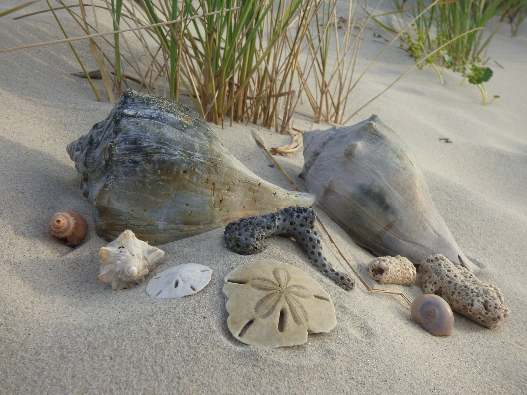 Ocracoke Shell Collecting