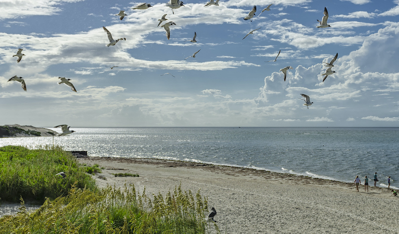 ocracoke island beach with seagulls and people on the sand dunes in the foreground